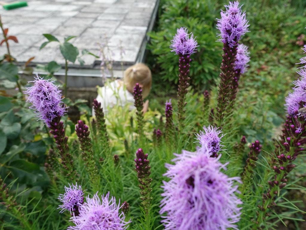 zbieranie kvetov